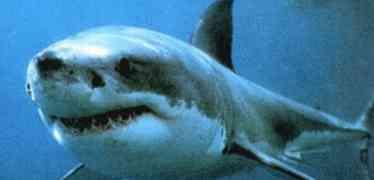 Crescono gli avvistamenti di squali in Italia