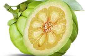Dimagrire velocemente con prodotti naturali: Dieta Garcinia
