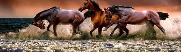 Parti del cavallo: nomi, dove si trovano e caratteristiche
