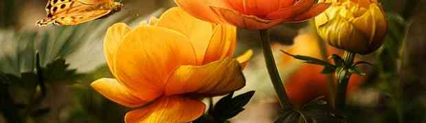Fiorellini primaverili: quali sono,come curarli e coltivarli